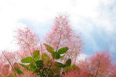 διακοσμητικό φυτό Στοκ Εικόνες