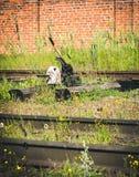 Διακόπτης σιδηροδρόμου, συγκέντρωση Διακόπτης σιδηροδρόμου του παλαιού σταθμού τρένου Στοκ Φωτογραφίες