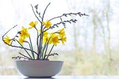 Διακόσμηση άνοιξη, daffodils και ιτιά γατών σε ένα κεραμικό κύπελλο Στοκ Εικόνες