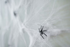 Διακόσμηση αποκριών της μαύρης αράχνης παιχνιδιών στον ιστό αράχνης Στοκ Εικόνα