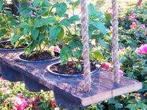 Διακόσμηση κήπων λουλουδιών Στοκ Εικόνες