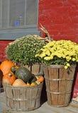 Διακόσμηση μερών φθινοπώρου Στοκ Εικόνες