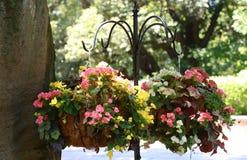 Διακόσμηση λουλουδιών στο πάρκο Στοκ Φωτογραφία