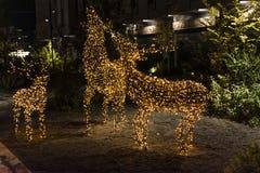 Διακόσμηση ταράνδων Χριστουγέννων στοκ εικόνες