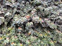 Διακόσμηση τοίχων σπιτιών τοίχων διακοσμήσεων λουλουδιών Στοκ Εικόνα