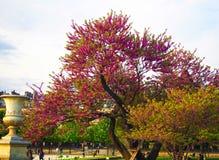 Διακόσμηση του κήπου Tuileries στο Παρίσι, Γαλλία στοκ φωτογραφία με δικαίωμα ελεύθερης χρήσης