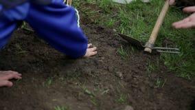 Διακόσμηση του χώματος γύρω από τις εγκαταστάσεις βακκινίων απόθεμα βίντεο
