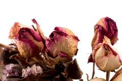 Διακόσμηση των ξηρών λουλουδιών - τριαντάφυλλα Στοκ Φωτογραφίες