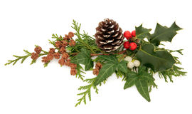 Διακόσμηση χειμερινής χλωρίδας Στοκ εικόνες με δικαίωμα ελεύθερης χρήσης