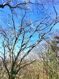 Διακλαδιμένος δέντρο Στοκ εικόνες με δικαίωμα ελεύθερης χρήσης