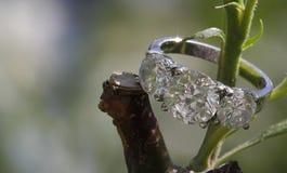 Διαμάντι τρία γαμήλιο δαχτυλίδι πετρών στον κλάδο δέντρων Στοκ φωτογραφία με δικαίωμα ελεύθερης χρήσης