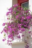 Διαμέρισμα με τα λουλούδια Στοκ φωτογραφία με δικαίωμα ελεύθερης χρήσης