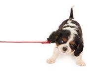διαμαρτυρία σκυλιών Στοκ εικόνες με δικαίωμα ελεύθερης χρήσης