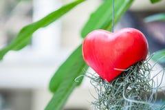 Διαμορφωμένες καρδιά ένωση και ρίζα κουδουνιών στο δέντρο Στοκ Εικόνα