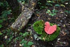 Διαμορφωμένο καρδιά φύλλο σε ένα mossy κολόβωμα στοκ φωτογραφία