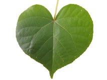 Διαμορφωμένο καρδιά φύλλο Στοκ φωτογραφία με δικαίωμα ελεύθερης χρήσης