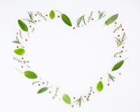 Διαμορφωμένο καρδιά δεντρολίβανο χορταριών πλαισίων διάφορο φρέσκο, φασκομηλιά, θυμάρι και Στοκ εικόνα με δικαίωμα ελεύθερης χρήσης
