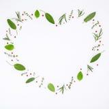 Διαμορφωμένο καρδιά δεντρολίβανο χορταριών πλαισίων διάφορο φρέσκο, φασκομηλιά, θυμάρι και Στοκ Εικόνες