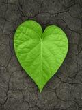 Διαμορφωμένο καρδιά φύλλο στο ραγισμένο χώμα Στοκ Εικόνες