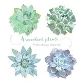 Διαμορφωμένο ροζέτα succulents σύνολο σχεδίου Echeveria διανυσματικό διανυσματική απεικόνιση