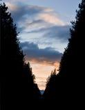 διαμόρφωση του δέντρου β σκιαγραφιών επιστολών Στοκ Εικόνες