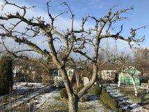 Διανομές το χιονώδη χειμώνα Στοκ Εικόνες