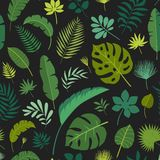 Διανυσματικά άνευ ραφής τροπικά φύλλα σχεδίων Στοκ Εικόνα