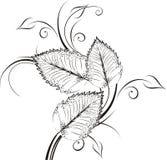 Διανυσματικά διακοσμητικά φύλλα Στοκ Εικόνα