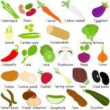 Διανυσματικά εικονίδια του λαχανικού με το αλφάβητο Α στο Ζ Στοκ Εικόνες