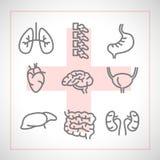 Διανυσματικά εικονίδια του εσωτερικού ανθρώπινου επίπεδου σχεδίου οργάνων Στοκ Εικόνες