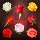 Διανυσματικά εικονίδια τριαντάφυλλων Στοκ Εικόνα