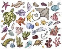 Διανυσματικά θαλασσινά κοχύλια καθορισμένα διανυσματική απεικόνιση