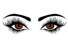 Διανυσματικά θηλυκά μάτια Ιστού με τα μακροχρόνια μαστίγια διανυσματική απεικόνιση