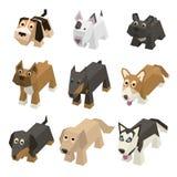Διανυσματικά διαφορετικά isometric σκυλιά φυλής Στοκ Εικόνες