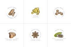 Διανυσματικά καθορισμένα λογότυπο και εμβλήματα προτύπων σχεδίου ζωηρόχρωμα - χορτάρια και καρυκεύματα Διαφορετικό εικονίδιο καρυ ελεύθερη απεικόνιση δικαιώματος