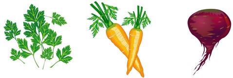 διανυσματικά λαχανικά απ&e ελεύθερη απεικόνιση δικαιώματος