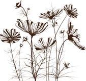 Διανυσματικά λουλούδια κήπων, bipinnatus κόσμου απεικόνιση αποθεμάτων