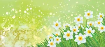 Διανυσματικά λουλούδια daffodil Στοκ εικόνα με δικαίωμα ελεύθερης χρήσης