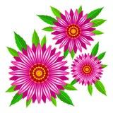 Διανυσματικά λουλούδια purpurea Echinacea διανυσματική απεικόνιση