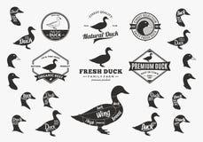 Διανυσματικά λογότυπο παπιών, εικονίδια, διαγράμματα και στοιχεία σχεδίου Στοκ Εικόνες