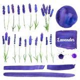 Διανυσματικά στοιχεία watercolor που τίθενται με lavender Στοκ εικόνα με δικαίωμα ελεύθερης χρήσης