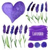 Διανυσματικά στοιχεία watercolor που τίθενται με lavender Στοκ Φωτογραφία