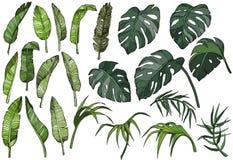 Διανυσματικά τροπικά φύλλα φοινικών καθορισμένα, φυτά ζουγκλών διανυσματική απεικόνιση