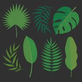 Διανυσματικά τροπικά φύλλα Στοκ Εικόνες