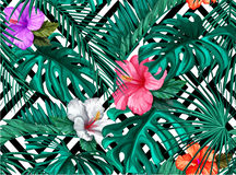 Διανυσματικά τροπικά φύλλα, hibiscus άνευ ραφής σχέδιο Στοκ Εικόνες
