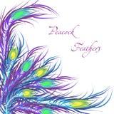 Διανυσματικά φτερά peacock διάνυσμα μουσικής ατόμων χρώματος ανασκόπησης Στοκ φωτογραφία με δικαίωμα ελεύθερης χρήσης