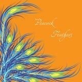 Διανυσματικά φτερά peacock Πορτοκαλιά ανασκόπηση Στοκ Φωτογραφία