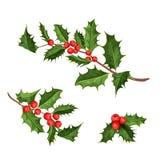 Διανυσματικά φύλλα γκι ελαιόπρινου Χριστουγέννων ilex Στοκ Εικόνα