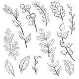 Διανυσματικά φύλλα και φυτά doodle Στοκ Φωτογραφία