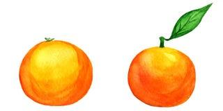 Διανυσματικά tangerines watercolor που απομονώνονται στο λευκό Στοκ εικόνα με δικαίωμα ελεύθερης χρήσης